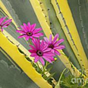 Daisies And Cactus Art Print