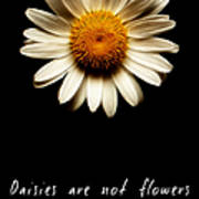 Daisies Are Not Flowers Fractal Version Art Print