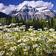 Daisies At Mount Robson Art Print by Elena Elisseeva