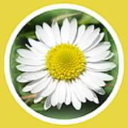 Daisy Closeup Art Print