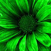Daisy Daisy Neon Green Art Print