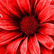 Daisy Daisy Neon Red Art Print