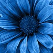 Daisy Daisy Pure Blue Art Print