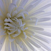 Daisy Dream Glow Art Print