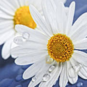 Daisy Flowers With Water Drops Art Print