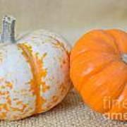Daisy Gourd And Pumpkin Art Print