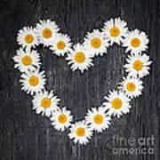 Daisy Heart Art Print
