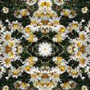 Daisy Kaleido 1 Art Print