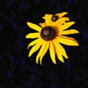 Daisy On Dark Blue Art Print