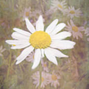 Daisy Textured Art Print
