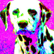 Dalmation Dog 20130125v1 Art Print by Wingsdomain Art and Photography