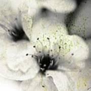Damaged Blooms Art Print