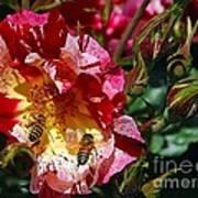 Dancing Bees And Wild Roses Art Print