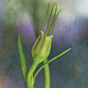 Dancing Bud - After Art Print