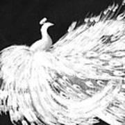 Dancing Peacock Black Art Print