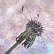 Dandelion Before Pretty Bokeh Art Print