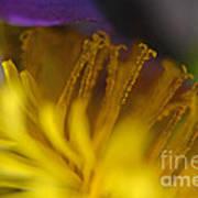 Dandelion Bloom Macro Art Print