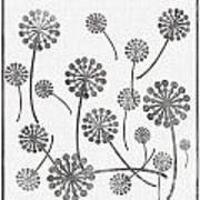 Dandelion Seeds Grey Art Print
