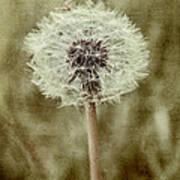 Dandelion Textures Art Print