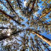 Dandenong Forest Art Print by Colin Woods