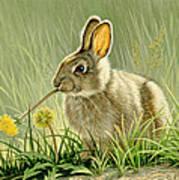 Dandi-nibbler Art Print