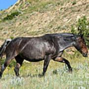 Dark And Wild Horse Art Print by Sabrina L Ryan