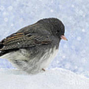 Dark Eyed Junco - Digital Snowflakes Art Print