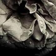 Dark Flower 13 Art Print