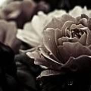 Dark Flower 20 Art Print