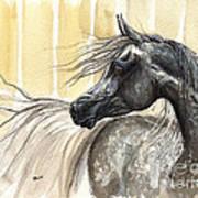 Dark Grey Arabian Horse 2014 02 17 Art Print