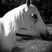 Dark Horse 2 Art Print by Chasity Johnson