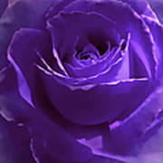 Dark Secrets Purple Rose Art Print by Jennie Marie Schell