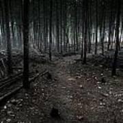 Dark Trail Art Print