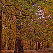 Darker Textured Autumn Trees Art Print