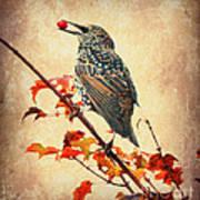 Darling Starling Art Print
