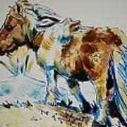 Dartmoor Pony Art Print