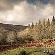 Dartmoor View Art Print
