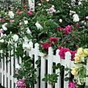 David Austin Roses Chelsea Flower Show Art Print