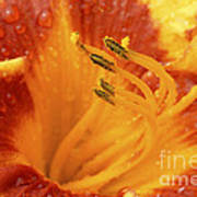 Day Lily In The Rain - 688 Art Print