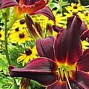 Daylilies And Rudbeckia Art Print