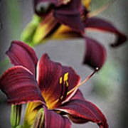 Daylilies Forever Art Print