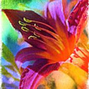 Daylily Delight Art Print
