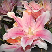 Pink Daylily In Bloom Art Print