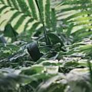 Dazzle Camouflage Patterns In The Garden Art Print