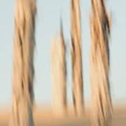 Dead Conifer Trees In Sand Dunes Art Print
