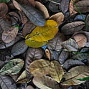 Dead Leaves Art Print
