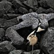 Dead Pelican Trash And Creosote Covered Rocks Art Print