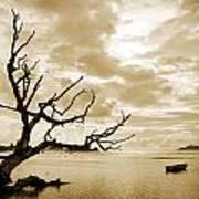 Dead Tree And Sea Art Print