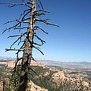 Dead Tree At Bryce Canyon  Overlook Art Print