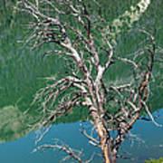 Dead Tree At Green River Lakes -wyoming Art Print